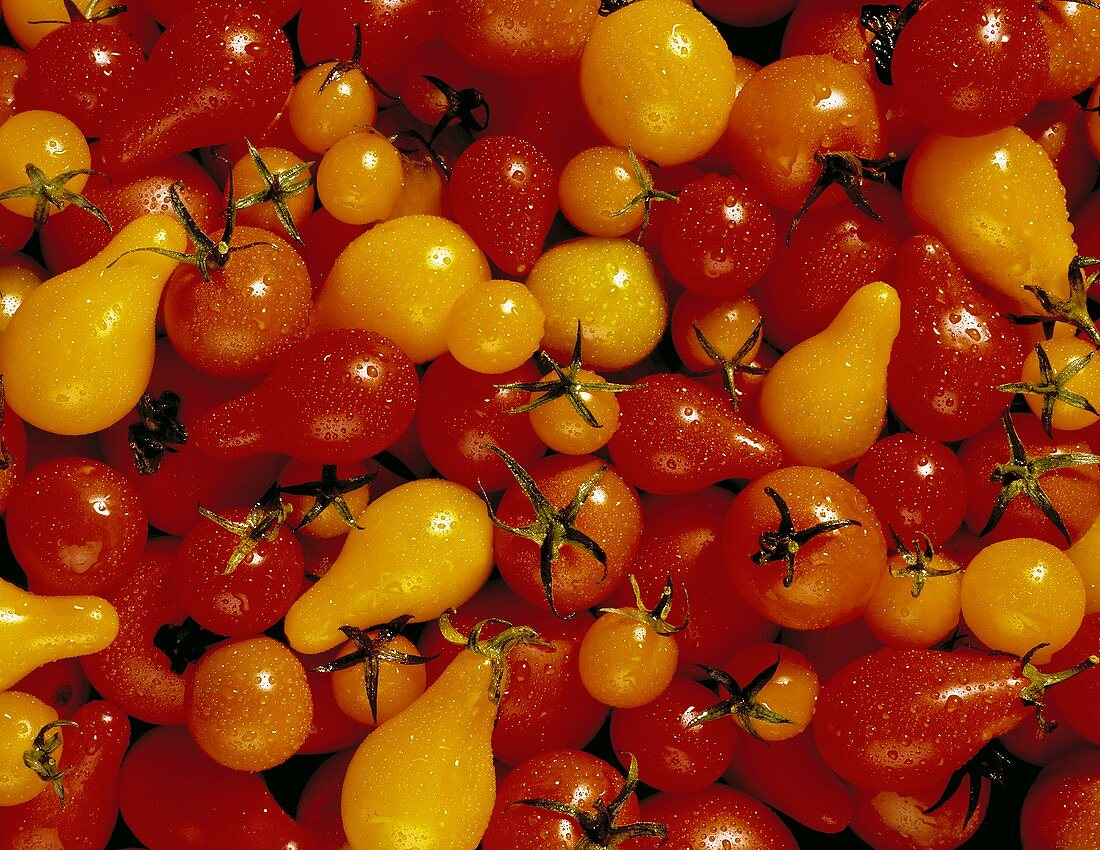 Assorted Types of Tomatoes