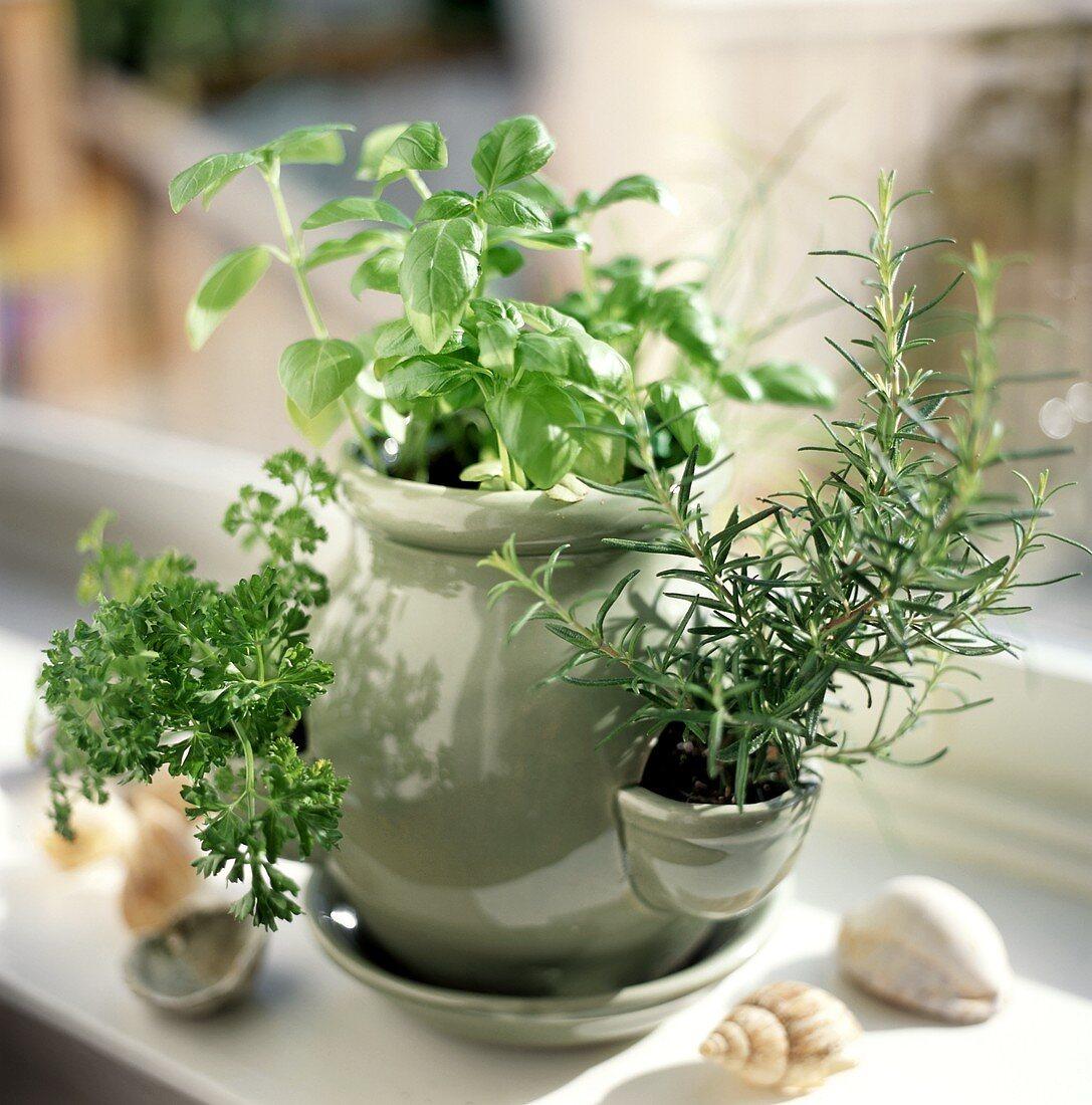 Fresh herbs in herb pot
