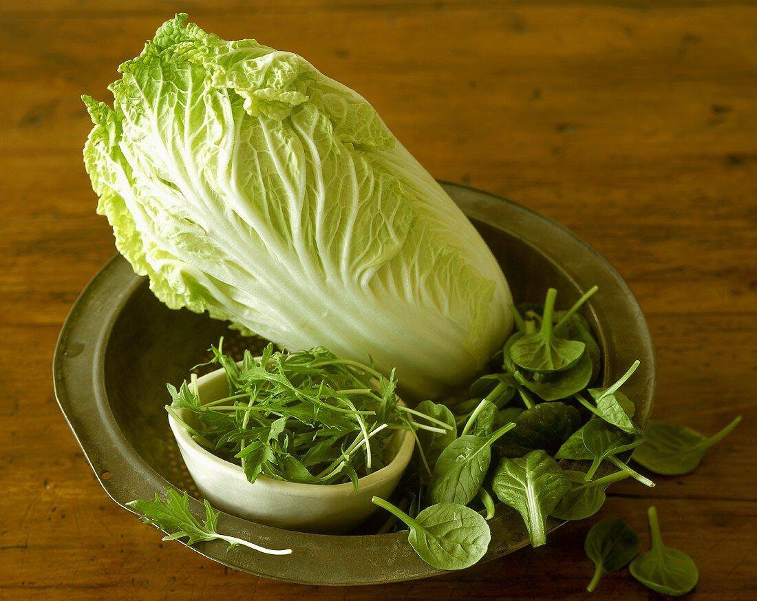 Napa Cabbage with Mizuna and Tatsoi