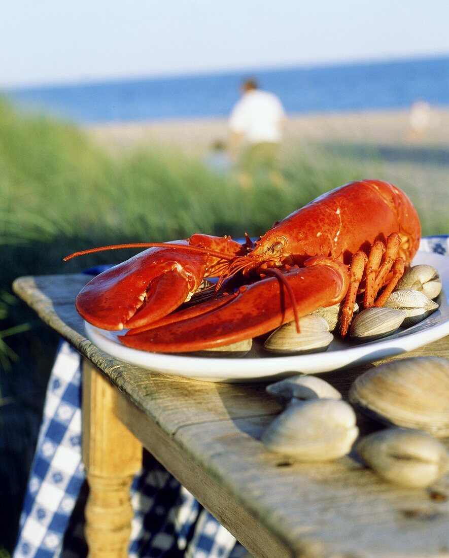 Cooked lobster with mussels on table by sea (Maine, USA)