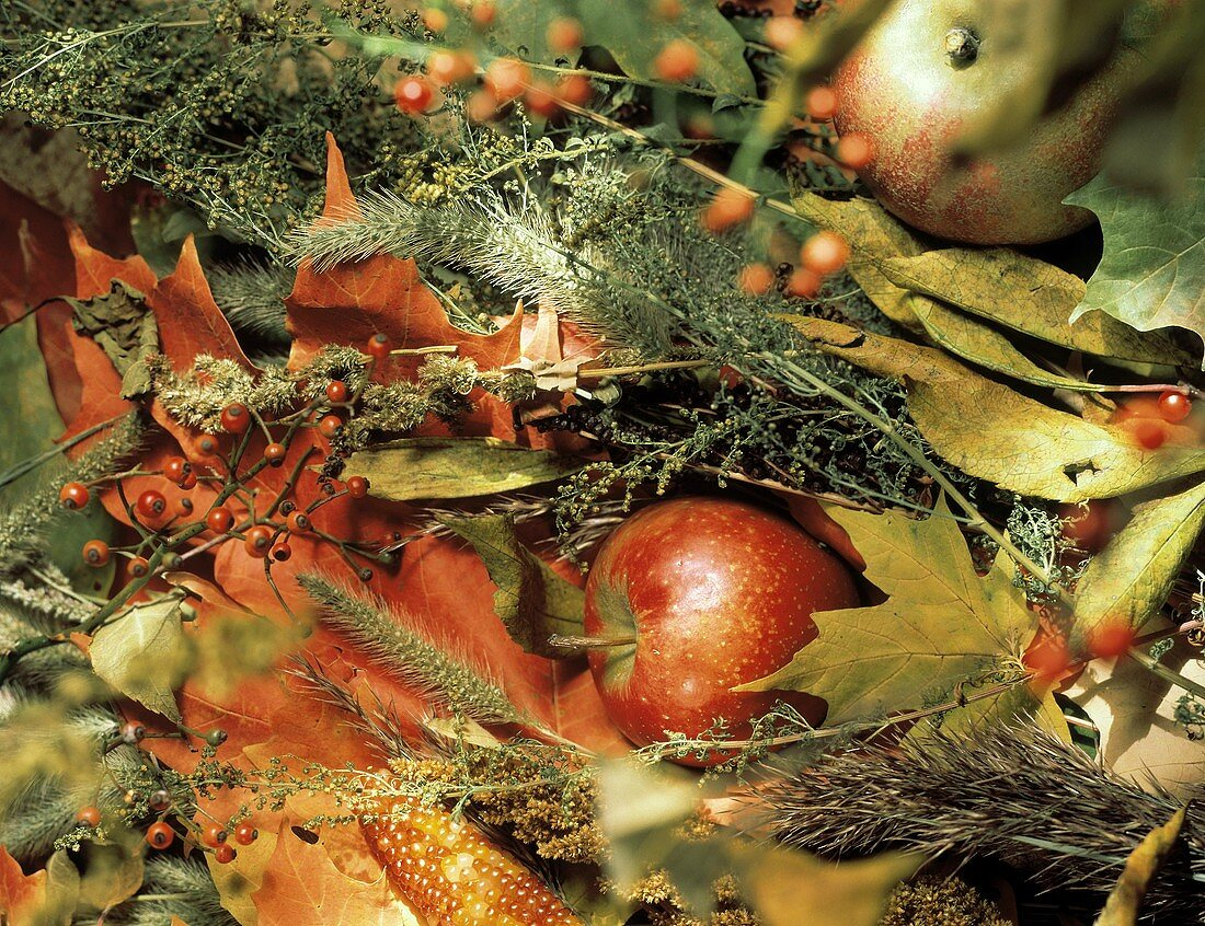 Apples with Dried Flowers; Leaves and Indian Corn