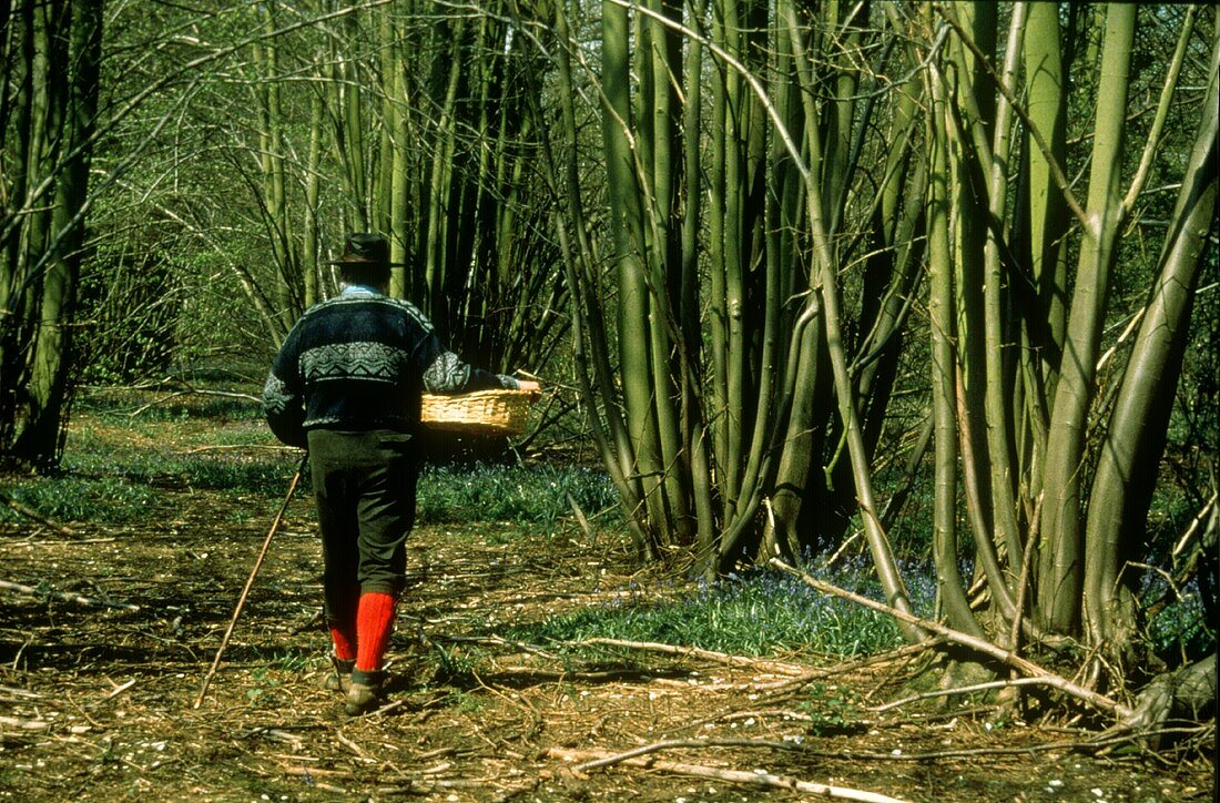 A Man Looking For Wild Mushrooms