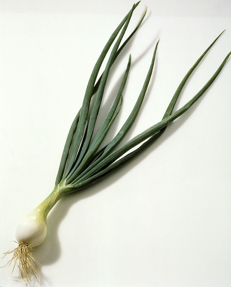 One Spring Onion