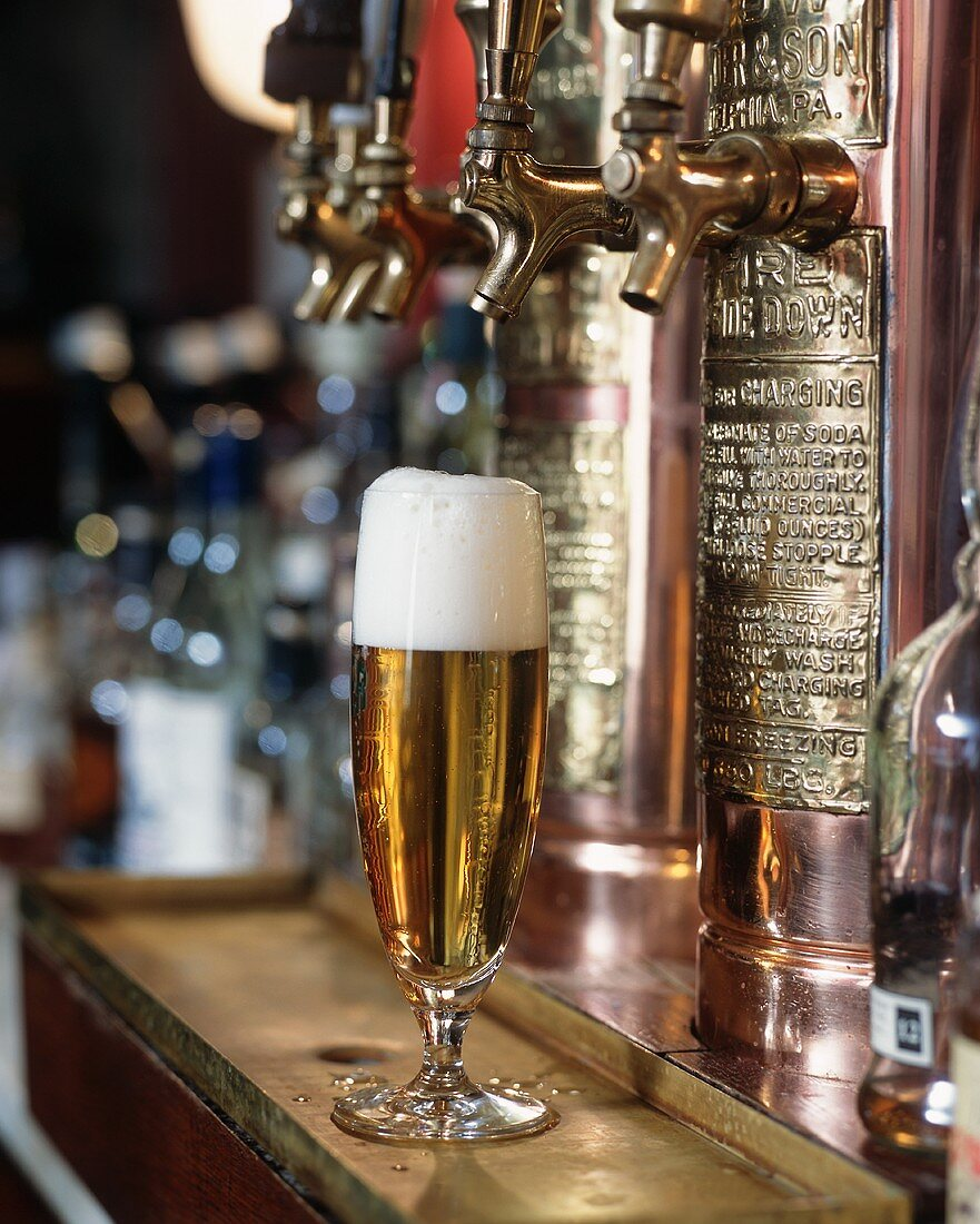 Tall Glass of Golden Lager on Bar in Front of Taps