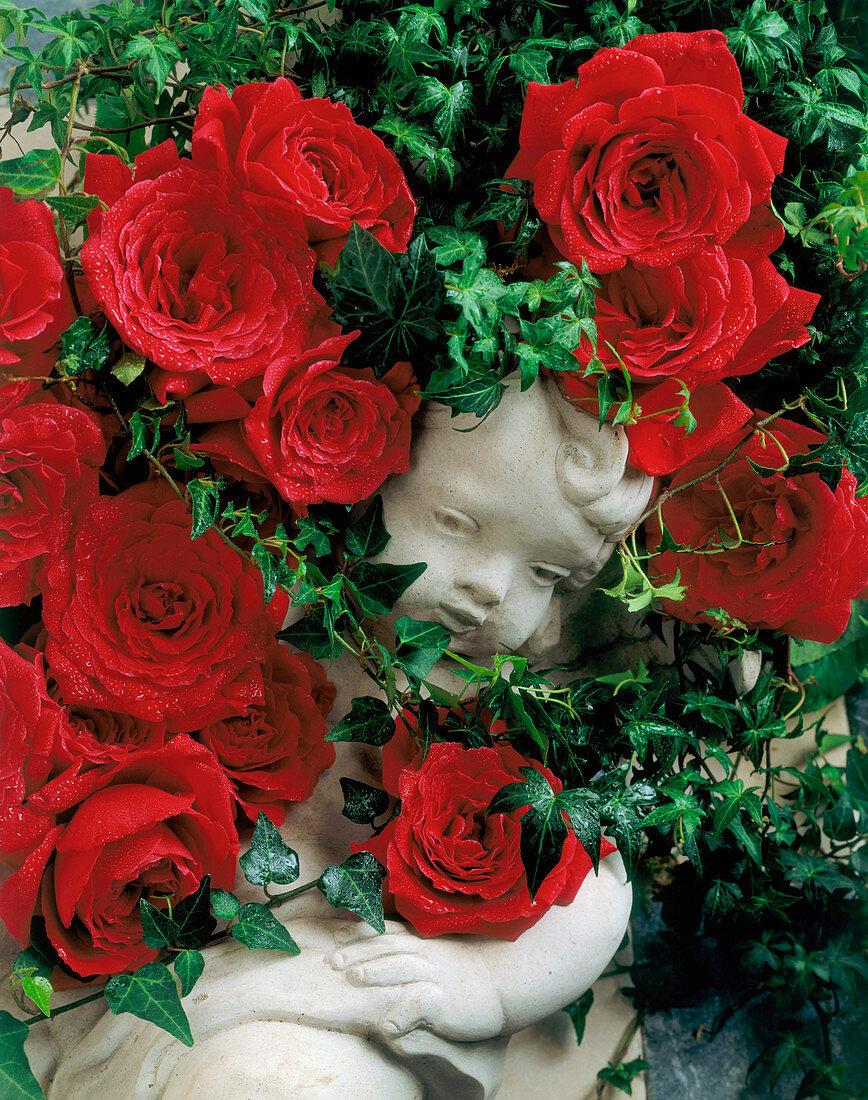 A Cherub Statue Surrounded by Red Roses