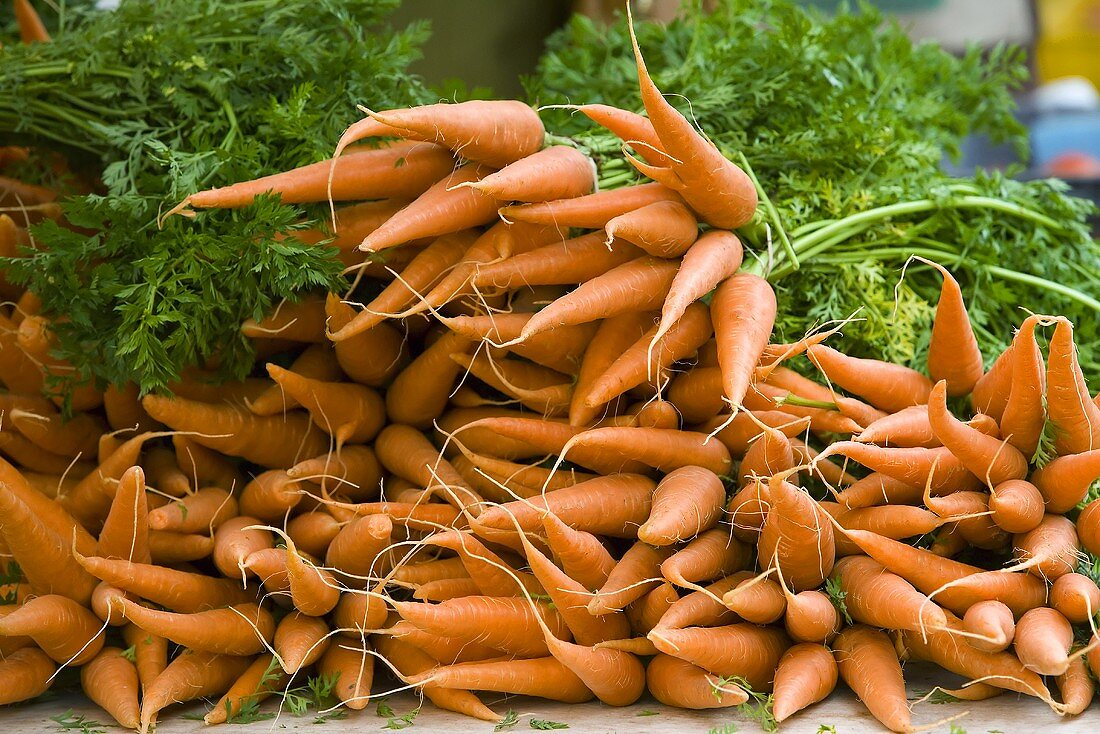 Bunches of Organic Carrots at Farmer's Market