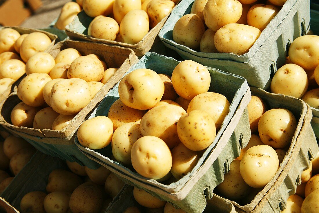 Organic Small White Potatoes at Farmer's Market