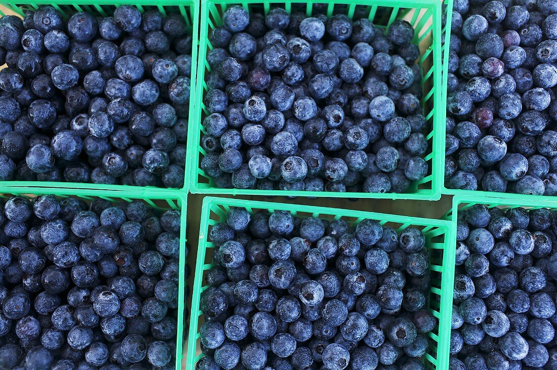 Plastic Containers of Fresh Blueberries at a Market