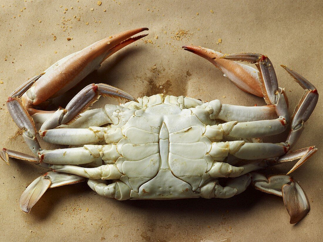 The Bottom of a Steamed Maryland Blue Crab
