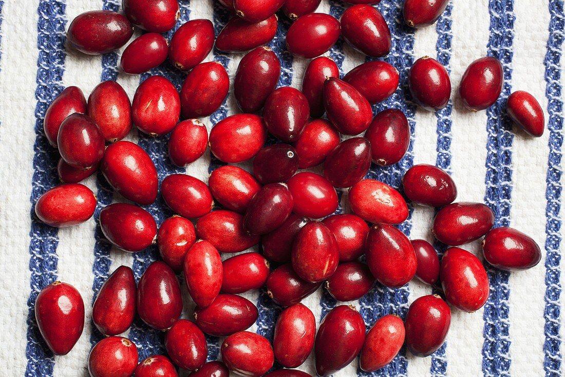Fresh Cranberries on a Dish Towel