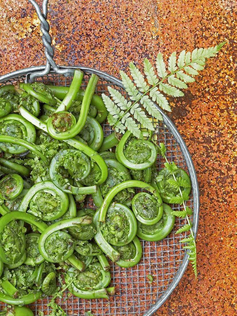 Fresh Fiddleheads in a Metal Strainer