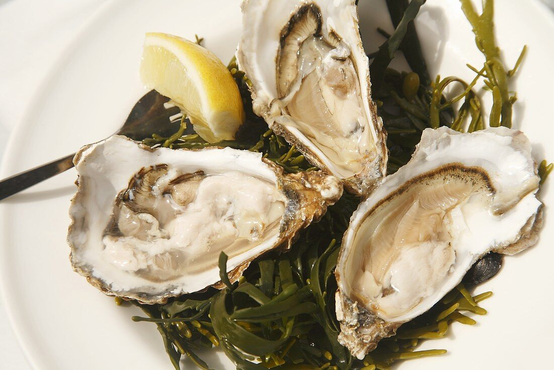 Three Large Oysters on the Half Shell on Seaweed