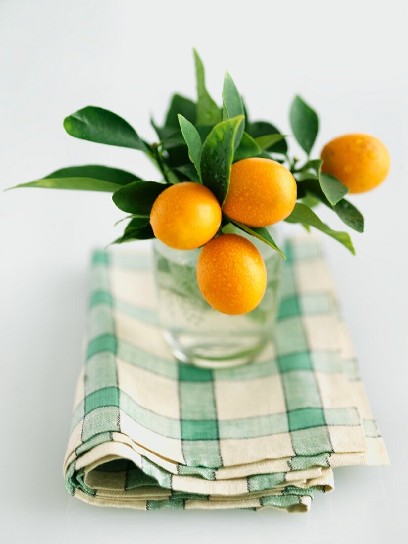 Fresh Kumquats on Branches in a Glass of Water
