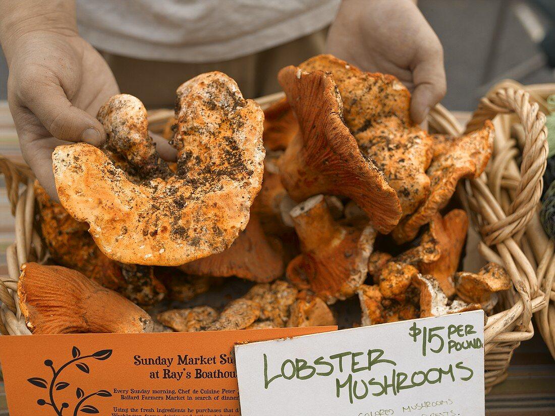 Hands Holding Lobster Mushrooms at Farmers Market in Seattle Washington