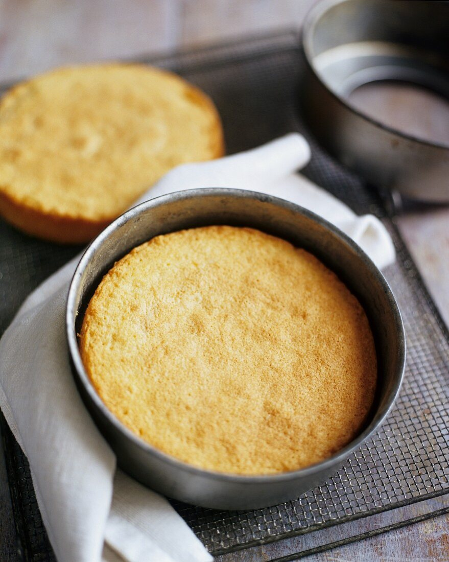 Freshly Baked Sponge Cake in a Pan
