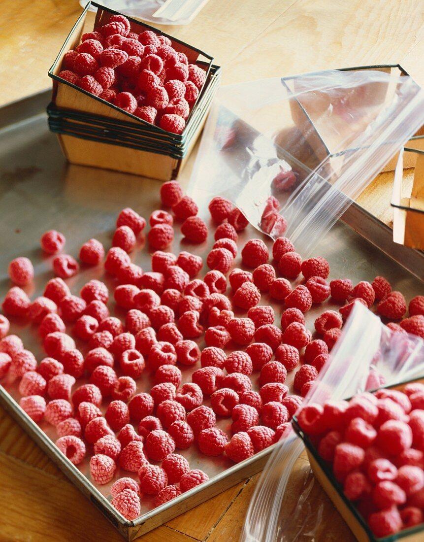 Freezing Fresh Raspberries; Frozen Raspberries on a Sheet Pan; Fresh Raspberries; Resealable Bags