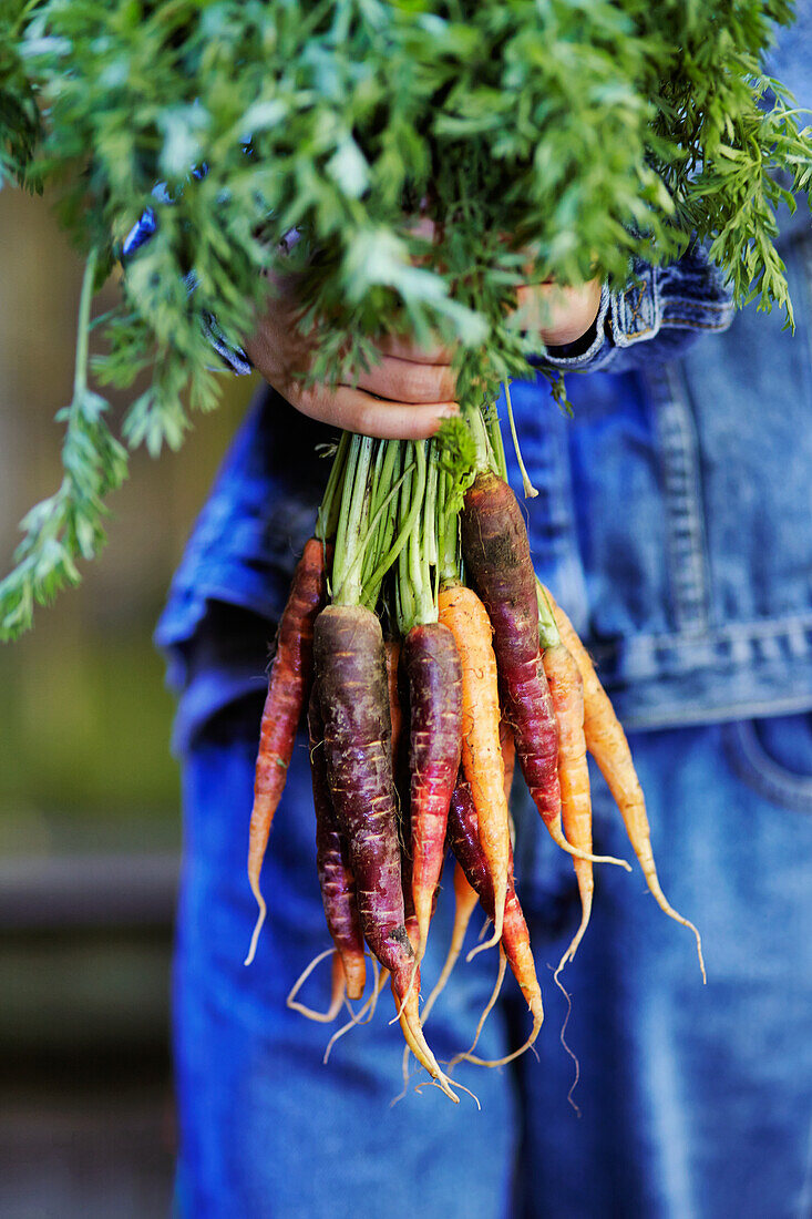 '6-year-old mixed race boy holding a bunch of organic carrots; Montreal, Quebec, Canada'