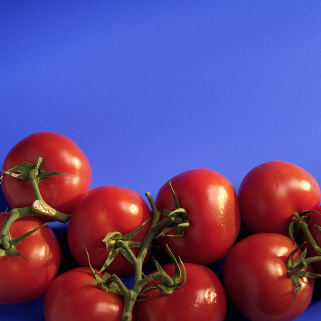 Vine Ripened Tomatoes on a Blue Background