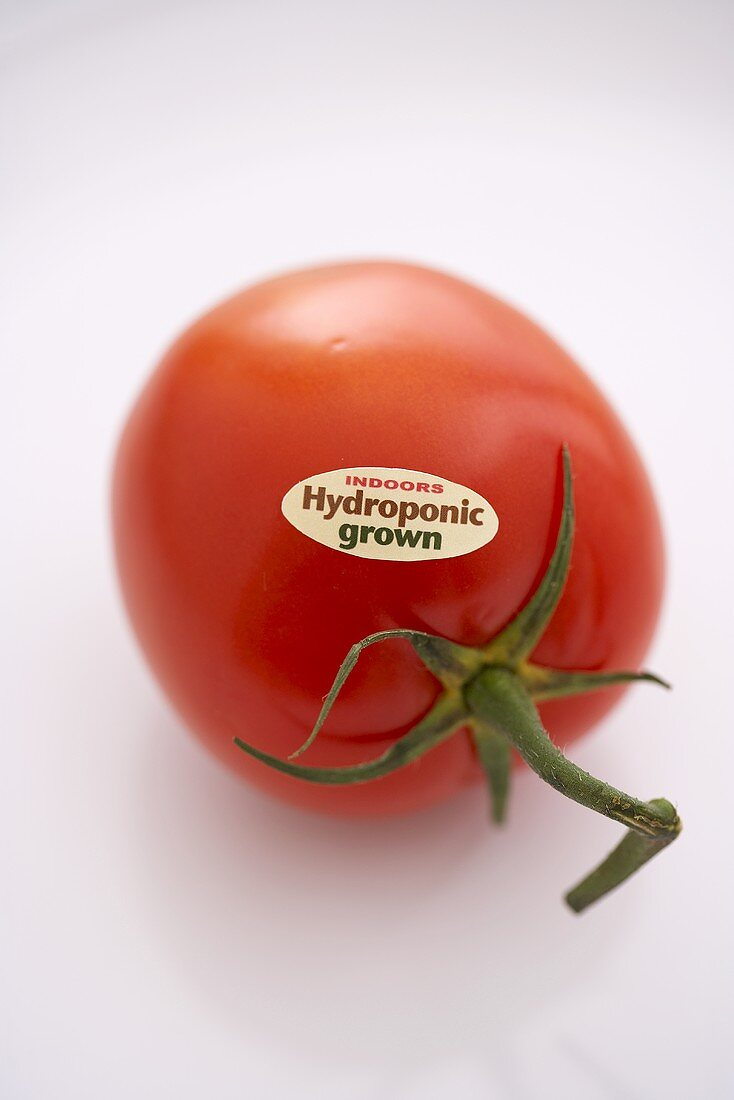 Hydroponic Grown Tomato on a White Background