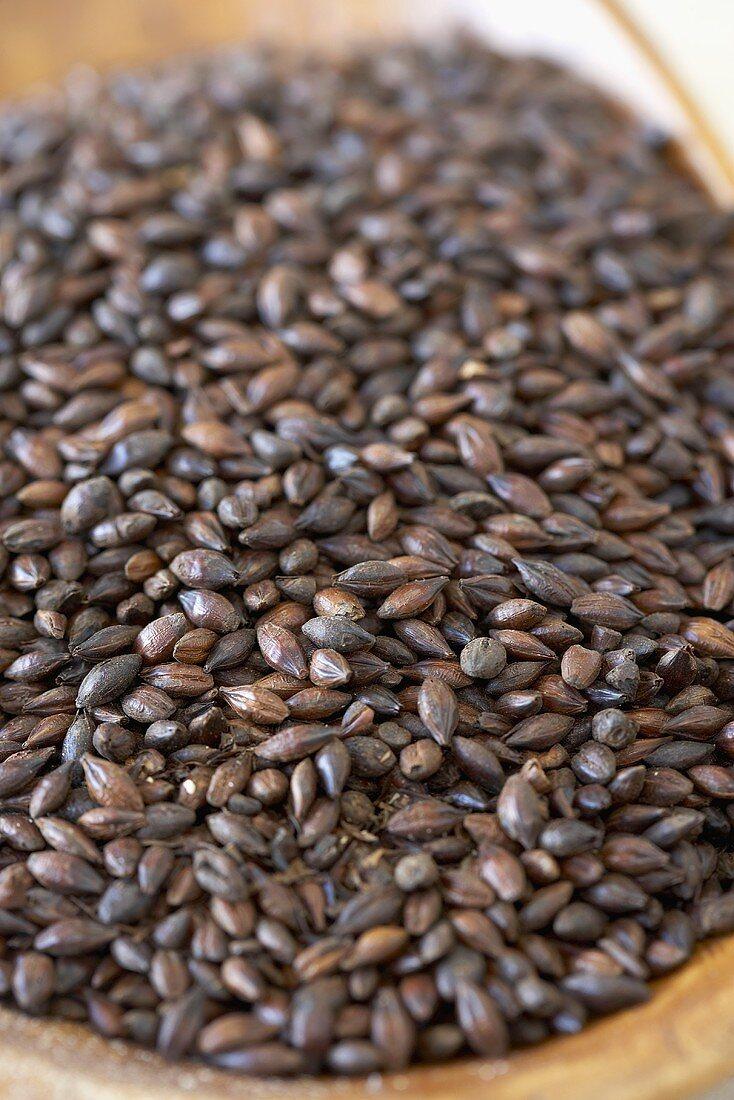 Chocolate Barley Beer Malt, Close Up