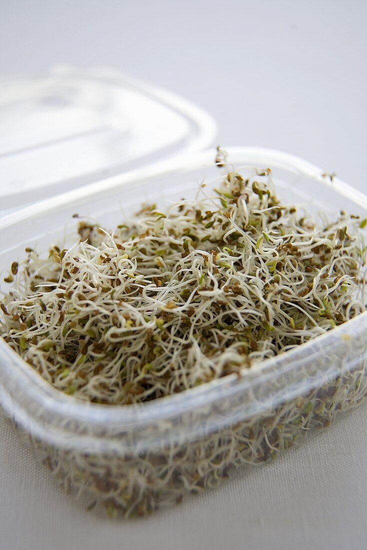 Alfalfa Sprouts in a Plastic Container