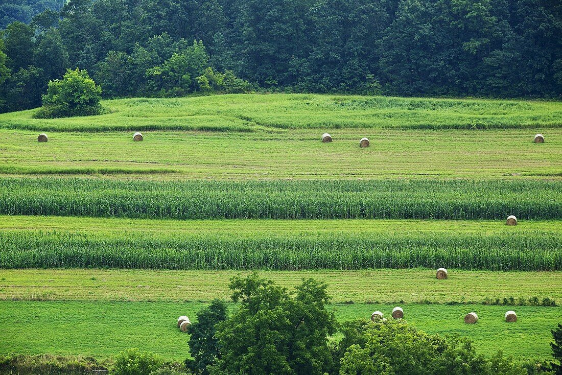 Bails of Hay in Field in Pennsylvania
