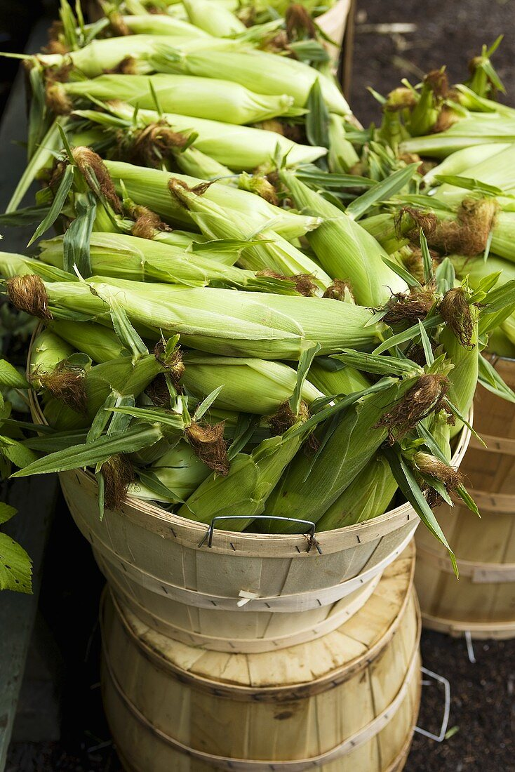 Locally Grown Vermont Corn at Farm Stand