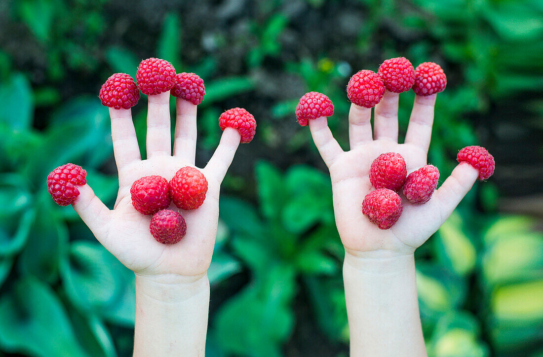 Close up of child holding raspberries on fingers, Ykaterinburg, Swerdlowsk, Russia