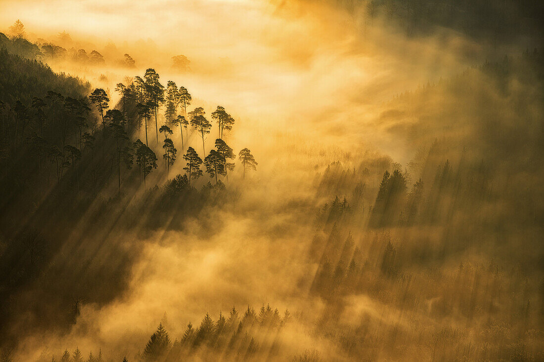 Sunbeams sparkling through the fog, Group of trees near Wegelnburg, Palatinate Forest, Rhineland-Palatinate, Germany