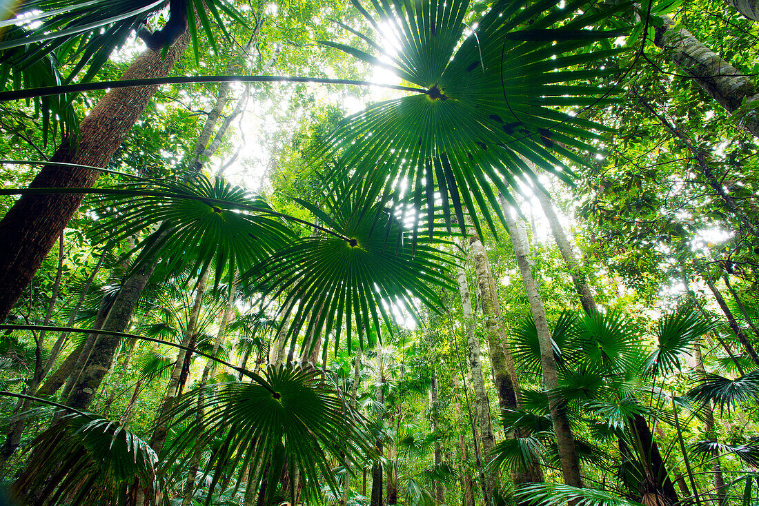 A walking track in Wallingat National Park leads through a grove of cabbage palms