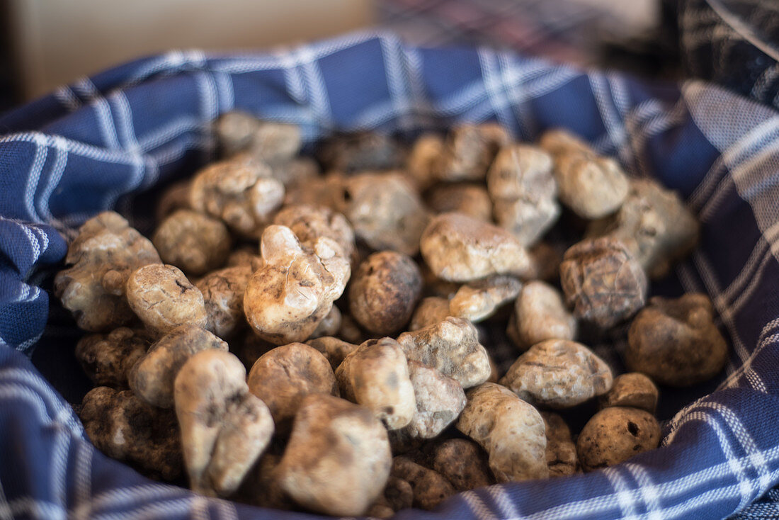 White truffle. Tuber Magnatum Pico,  collected in the local woods and on sale during the November fair