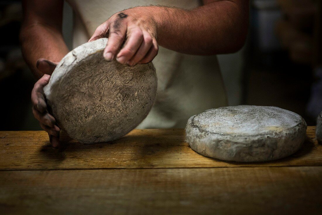 France, Savoie, Aillon le Jeune, Bauges mountains, La Correrie farm, manufacturing of Bauges tome Cheese AOP, refining work in cellar