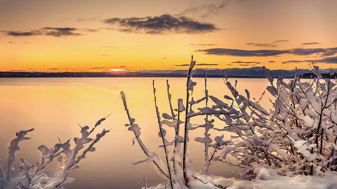 Wintermorgen mit beschneiten Pflanzen  bei Sonnenaufgang am Starnberger See, Tutzing, Bayern, Deutschland