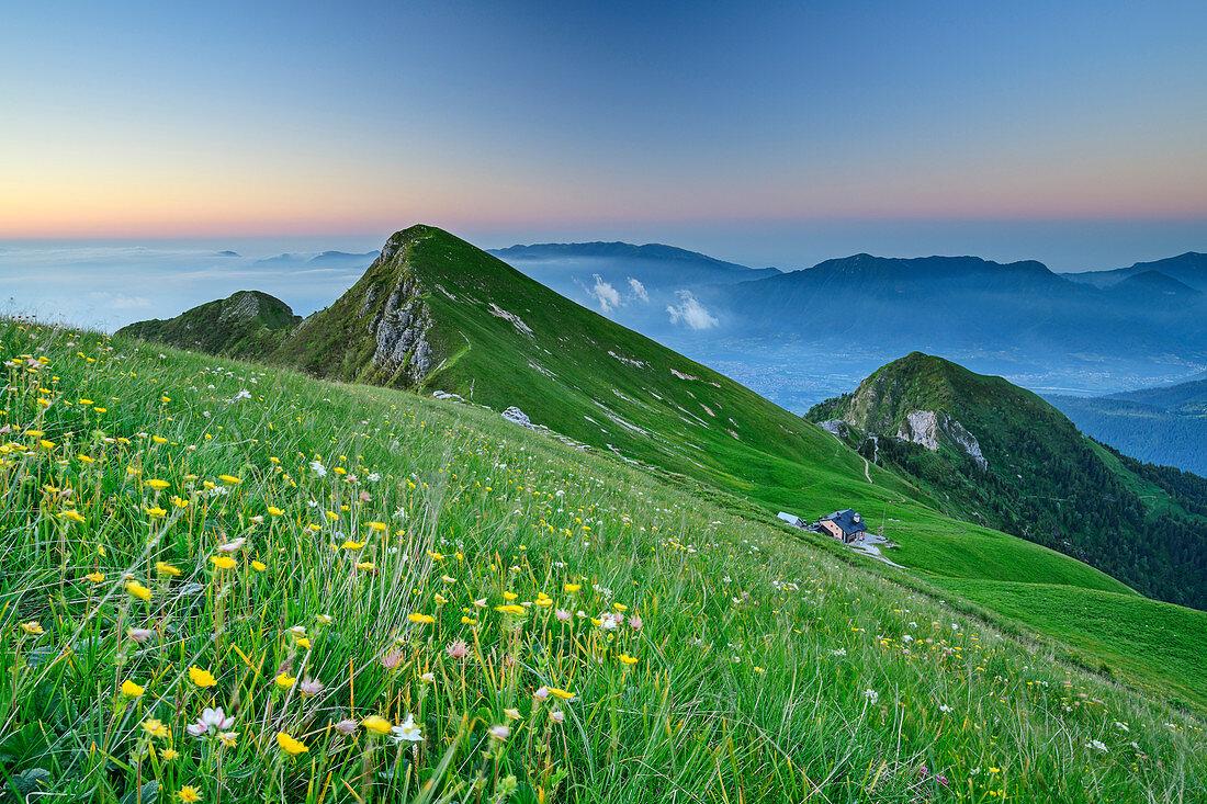 Blumenwiese vor Bergkulisse in der Morgendämmerung, Vette Grandi, Belluneser Dolomiten, Nationalpark Belluneser Dolomiten, Venezien, Venetien, Italien