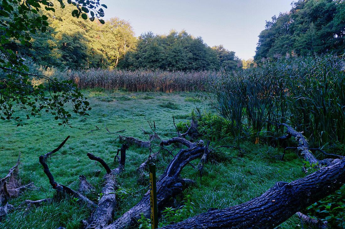 Düstere Teiche, Naturschutzgebiet bei Eiche, Potsdam, Land Brandenburg, Deutschland