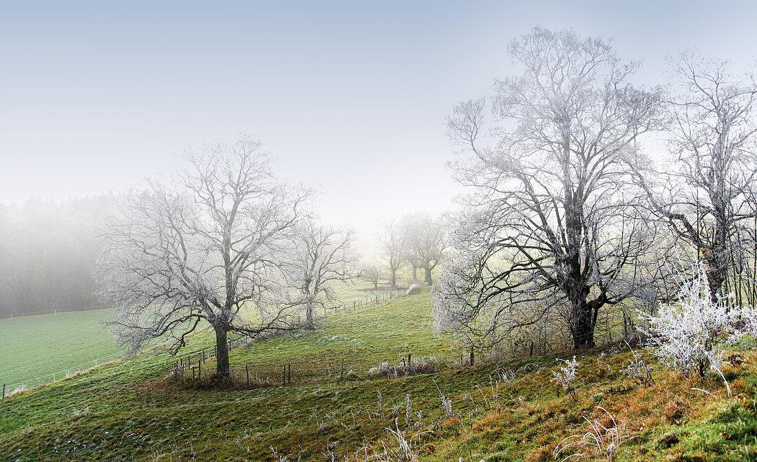 Bereifte Bäume im Winter, Ilkahöhe, Tutzing, Bayern, Deutschland