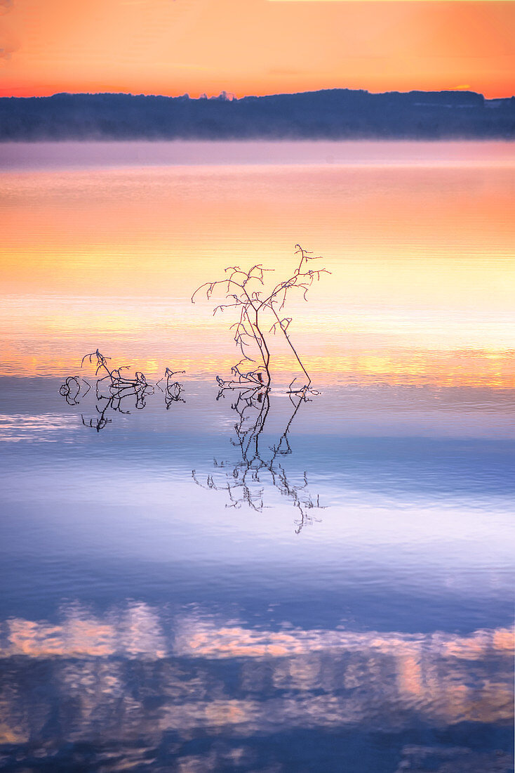 Frosted tree in the lake at sunrise in the fog at Lake Starnberg, Bavaria, Germany