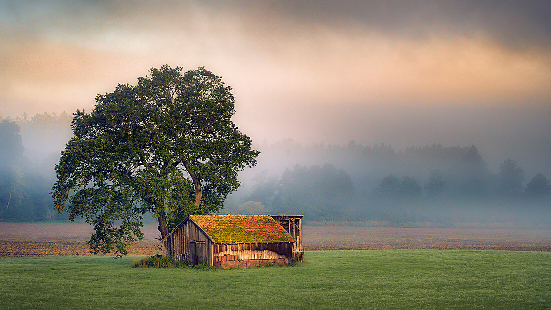 Barn in autumn mood in the morning light at sunrise, Bernried, Bavaria, Germany