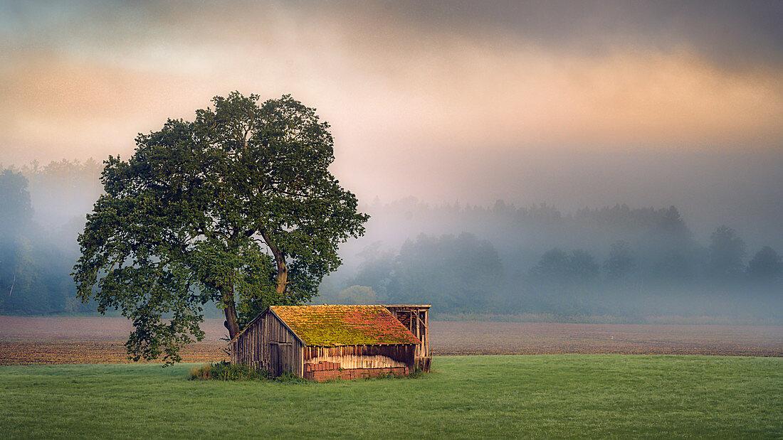 Scheune in herbstlicher Stimmung im Morgenlicht bei Sonnenaufgang, Bernried, Bayern, Deutschland