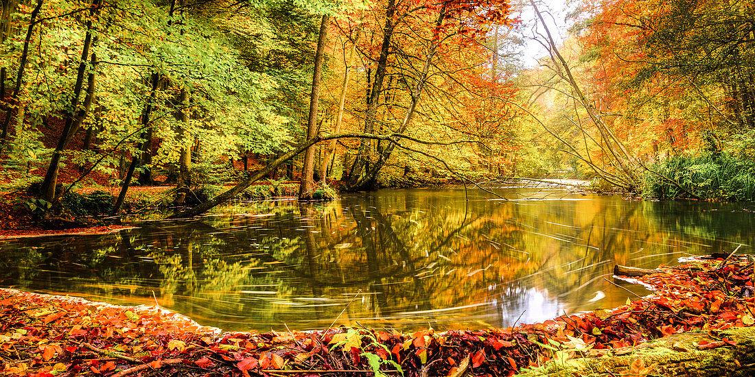 Autumn forest on the Würm, Leutstetten, Bavaria, Germany