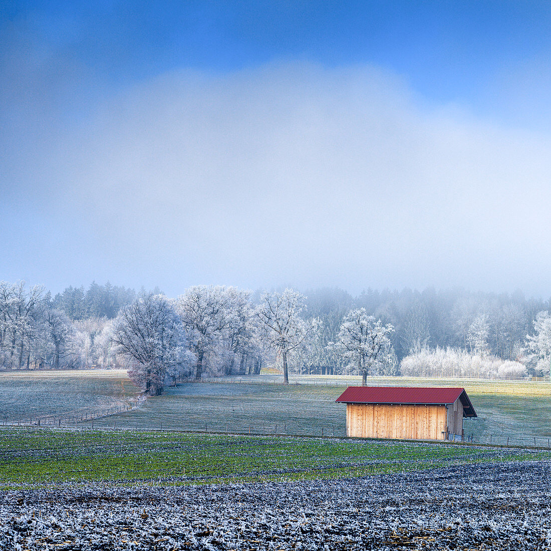 Cultivated landscape with barn in winter, Bavaria, Germany