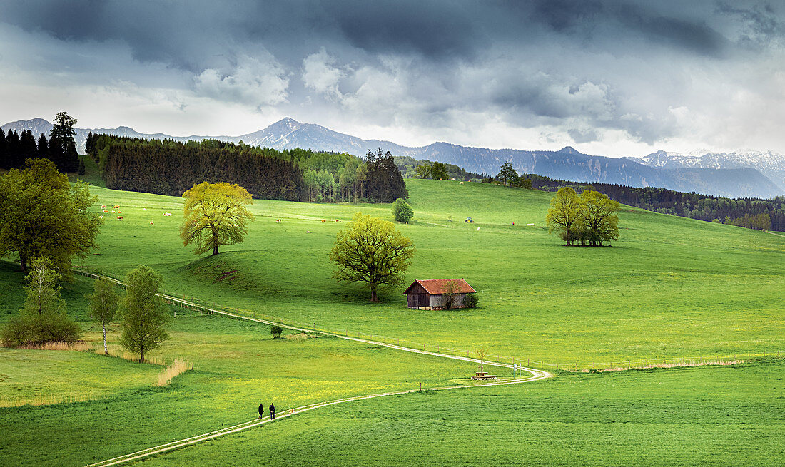 Meadows in Bavaria with mountain views, Antdorf, Bavaria, Germany