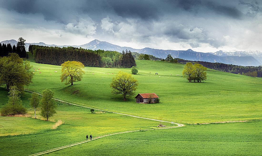 Wiesen in Bayern mit Bergblick, Antdorf, Bayern, Deutschland
