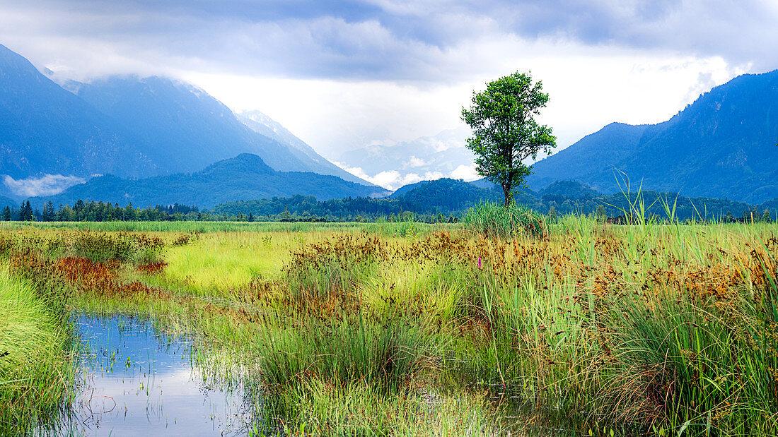 Blick ins Murnauer Moos bei Hochwasser, Murnau, Bayern, Deutschland