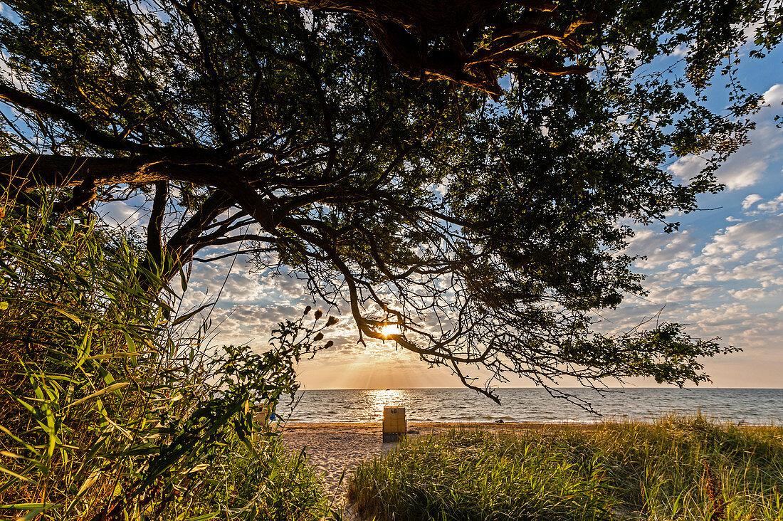Strandkorb im Sonnenaufgang in Ostermade an der Ostsee, Ostholstein, Schleswig-Holstein, Deutschland
