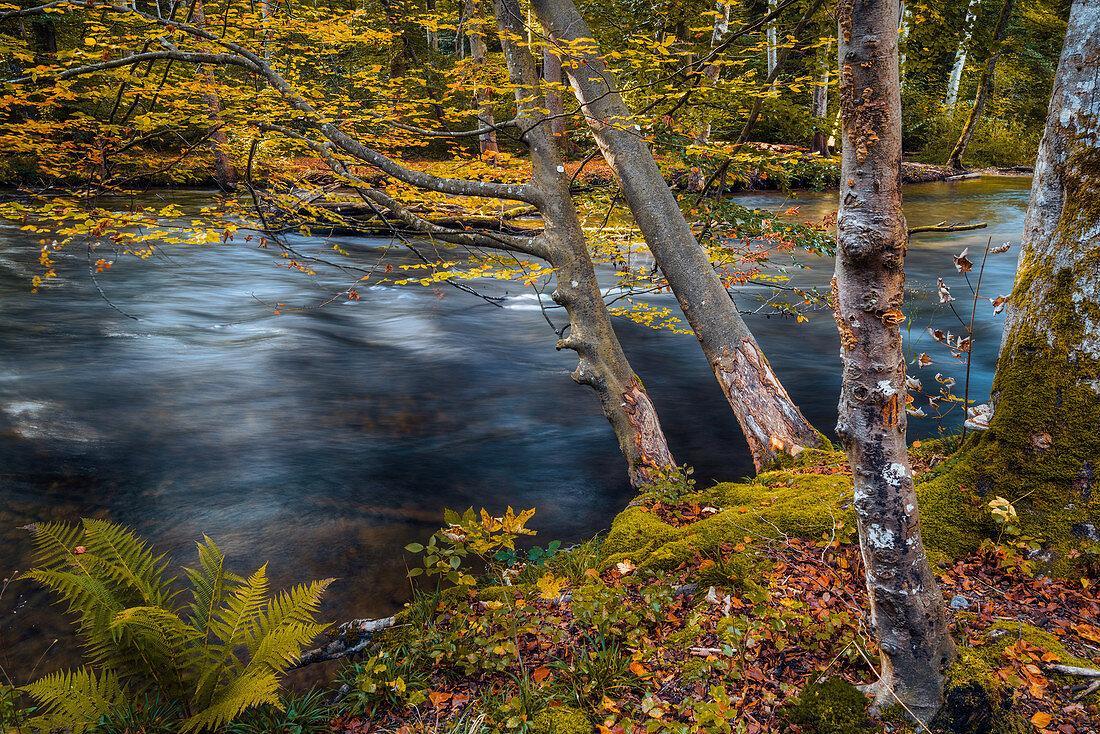 Herbst an der Würm, Leutstetten, Starnberg, Oberbayern, Bayern, Deutschland