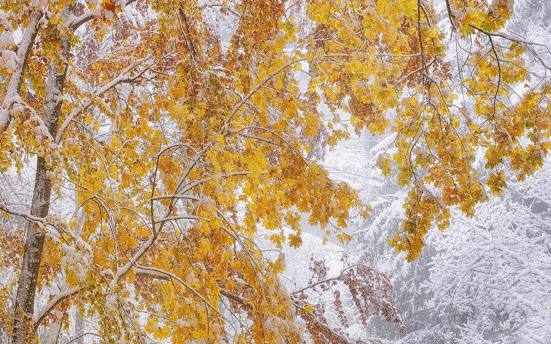 Überraschender Wintereinbruch am Isar Hochufer, Baierbrunn, Bayern, Deutschland