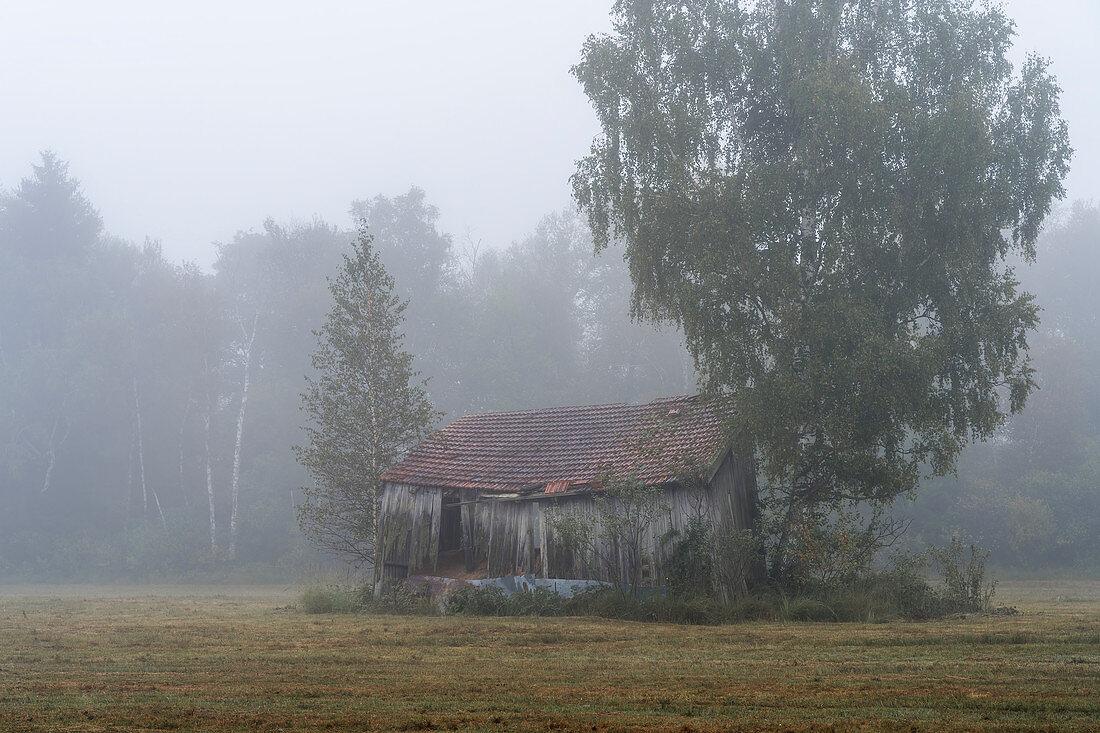 Alter Schuppen im Moor, Weilheim, Oberbayern, Bayern, Deutschland