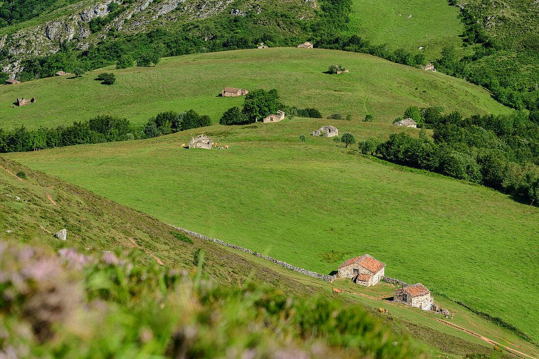 Tiefblick auf Almen und Wiesen, Picos de Europa, Nationalpark Picos de Europa, Kantabrisches Gebirge, Asturien, Spanien
