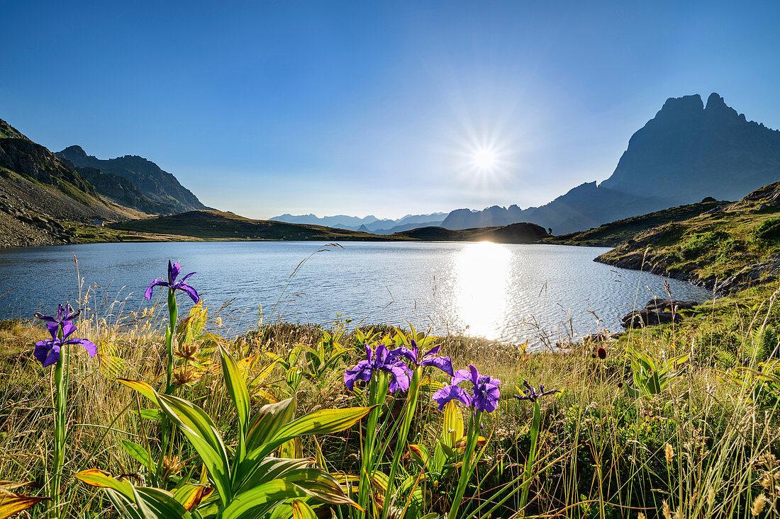 Wilde Iris vor Lac Roumassot und Pic du Midi d´Ossau, Lac Roumassot, Nationalpark Pyrenäen, Pyrénées-Atlantiques, Pyrenäen, Frankreich
